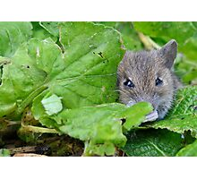 Crouching Photographer, Hidden Mouse Photographic Print