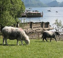 Derwentwater Sheep and Lamb 2 by MFleming