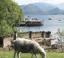 Derwentwater Sheep 3 by MFleming