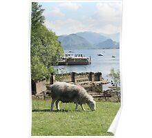Derwentwater Sheep 3 Poster