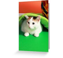 Hide and seek playing cat Greeting Card