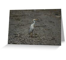 Cattle Egret on a Road Greeting Card