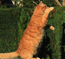 Tai chi cat by turniptowers