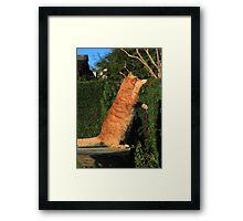 Tai chi cat Framed Print