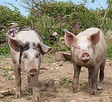 Bacon&Sausage  by Ryszard  Wozniak