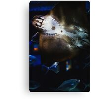 Bottom Of A Ray Fish Canvas Print