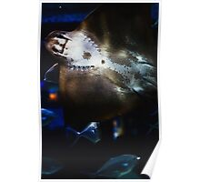 Bottom Of A Ray Fish Poster