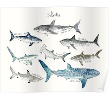 Sharks - Landscape Format Poster