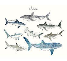 Sharks - Landscape Format Photographic Print