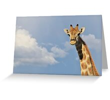 Giraffe - Posture of Blue - African Wildlife Background  Greeting Card