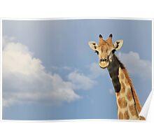 Giraffe - Posture of Blue - African Wildlife Background  Poster