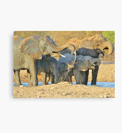 Elephant - Joy of Water - African Wildlife Background  Canvas Print