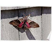 The Moth Series V Poster