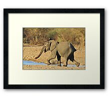 Elephant - Run of Youth - African Wildlife Background  Framed Print
