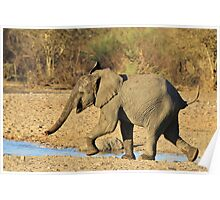 Elephant - Run of Youth - African Wildlife Background  Poster