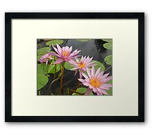 Can-can pink petals water lilies – 1 Framed Print