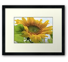 Giant gold sunflower crown and petals – 1 -Losely Framed Print