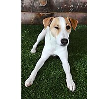 Happy Dog Winking Photographic Print
