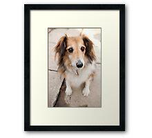 Big Puppy Eyes Framed Print