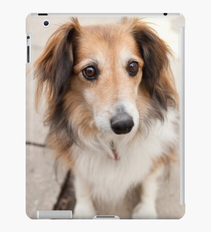 Big Puppy Eyes iPad Case/Skin