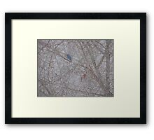 Bluebird and Cardinal in a snow storm Framed Print