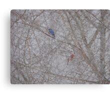 Bluebird and Cardinal in a snow storm Canvas Print