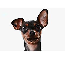 Surprised Dog Photographic Print