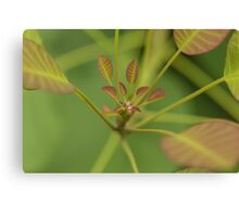Water droplet on leaves Canvas Print