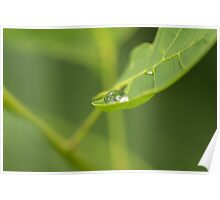 Droplet on a leaf Poster