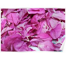 the ragged petals rose Poster
