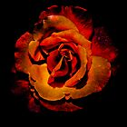 Fire Rose tote bag and pillow by Brent Fennell