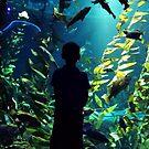Austyn at Ripley's Aquarium, Toronto, ON Canada by Shulie1