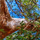 Chinese oak reaching out by indiafrank
