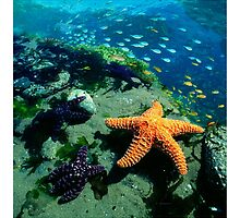 KEY WEST CORAL REEF AND SEA CREATURES, by E. Giupponi by Elizabeth Giupponi