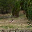 Oh Deer by GailD