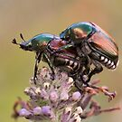 Japanese Beetles by Otto Danby II
