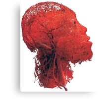 Blood Vessels Canvas Print