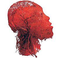 Blood Vessels Photographic Print