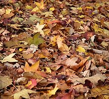 A Leafy Mix by Karine Radcliffe