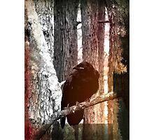 Inky Raven Photographic Print