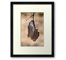 Almost Transparent leaf Framed Print