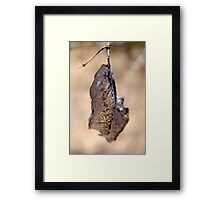 Almost Transparent leaf- Macro Framed Print
