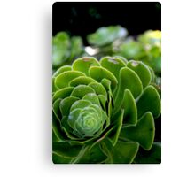 The Beauty of nature -Macro Canvas Print