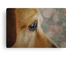 Staying Focused On A Goal- Bouncer The Labrador Canvas Print