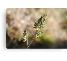 The World In Macro Canvas Print