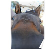 Loving Horse -A Curious mind Poster
