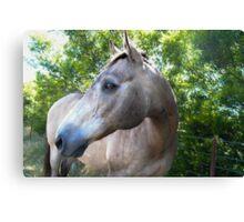 SandMan-The Horse  Canvas Print