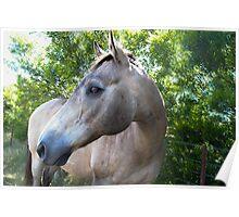 SandMan-The Horse  Poster