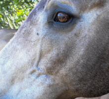 SandMan-The Horse  Sticker
