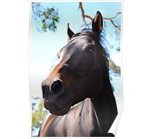 Beauty Of Horses  Poster